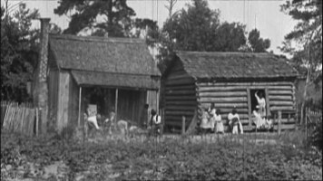 [Cottonfields and a cottage]
